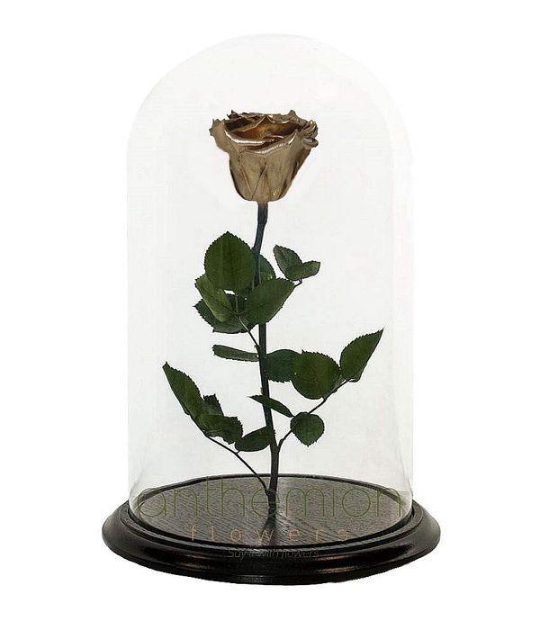 Χρυσό forever rose (Μεσαίο μέγεθος)