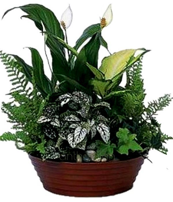 Plant arrangement in ceramic pot