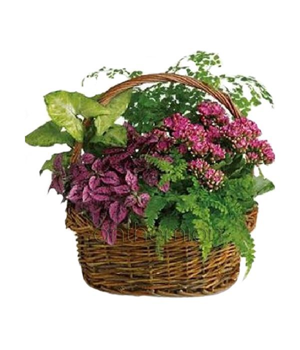 Blooming and green plant arrangement