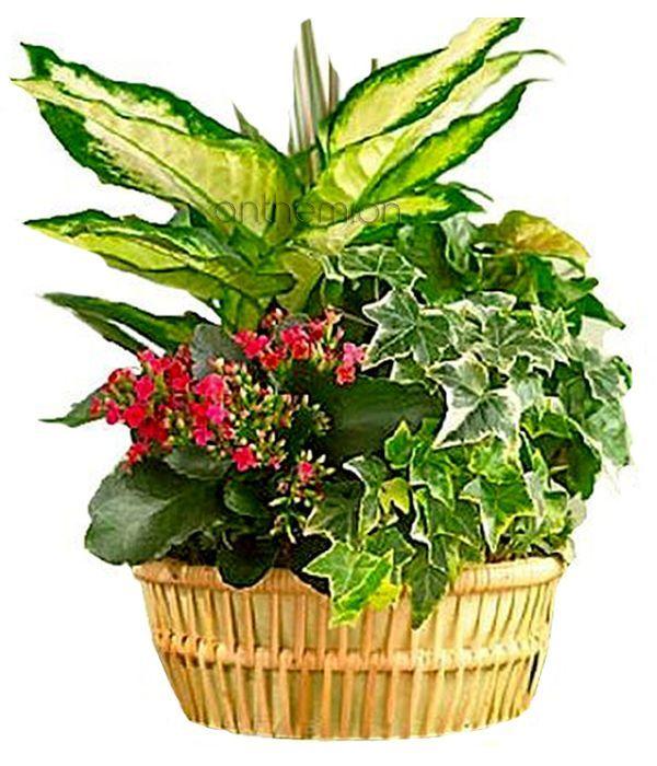 Mini plant garden in a basket