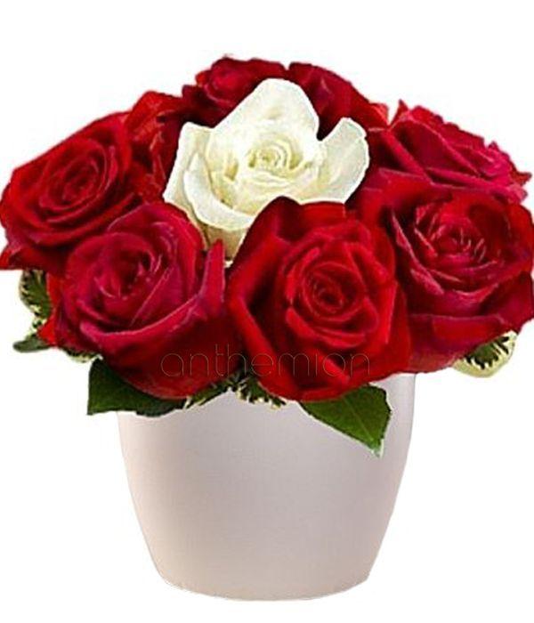 Rose arrangement in pot
