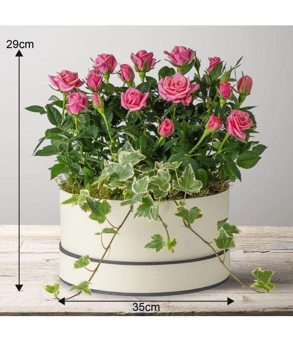 Flourishing Roses