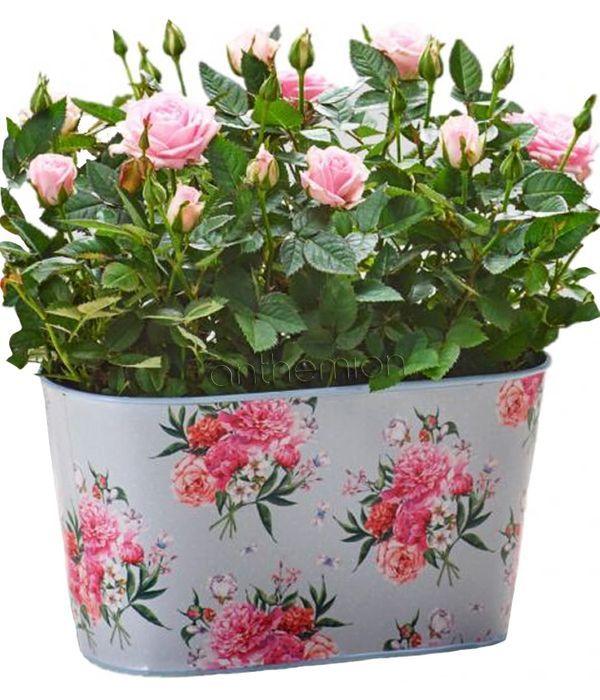 Flourishing Roses in floral tin