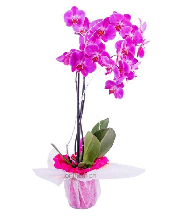 Breathtaking orchid plant