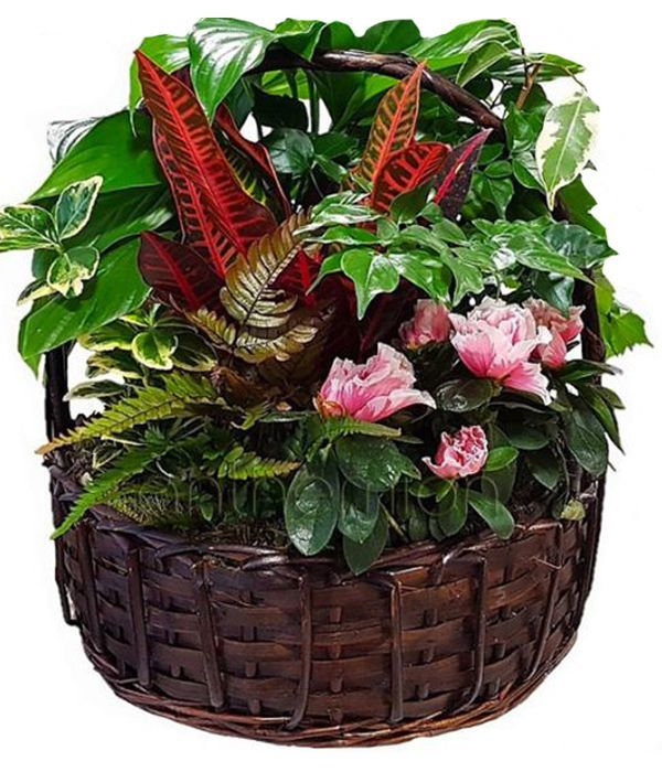 Basket with green and flowering plants