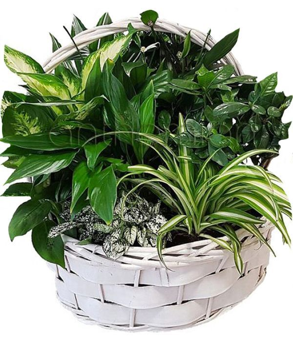 Garden οf Plants