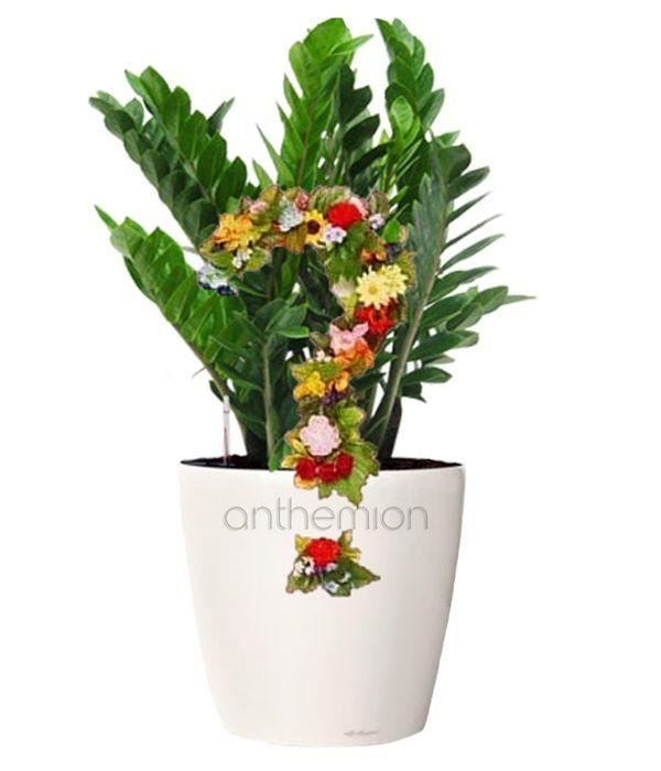 Πράσινο Φυτό Εποχής