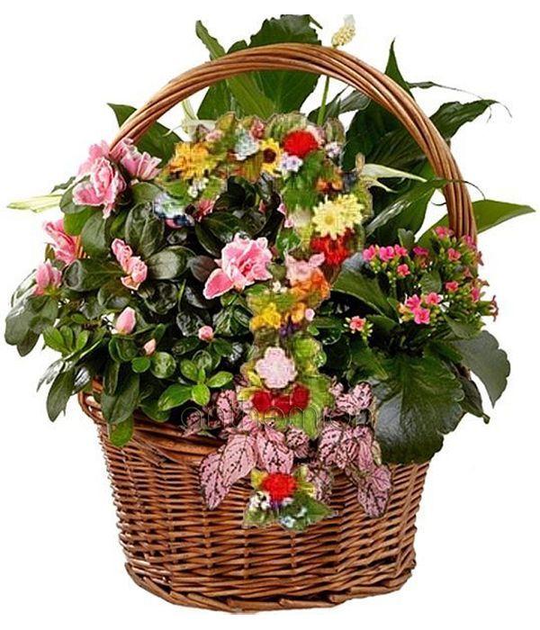 Basket of Seasonal Plants