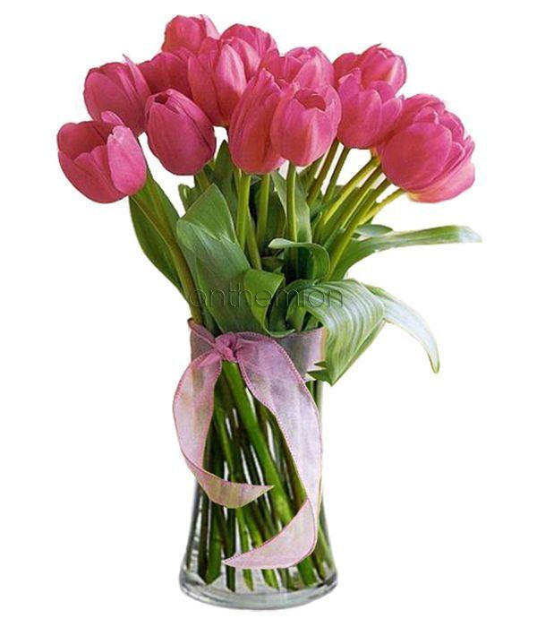 Stunning pink tulips