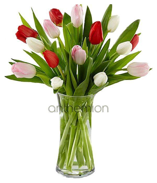 Fresh lovely tulips