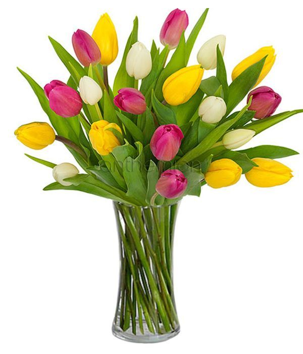 White, pink and yellow tulips