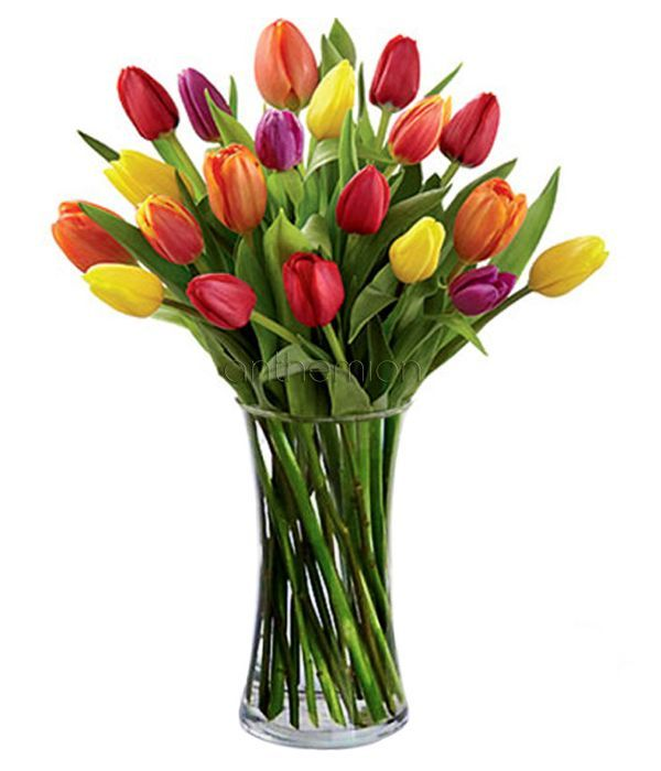 Colorful smiles with tulips