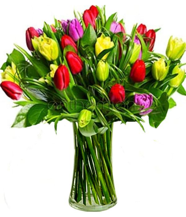 Gorgeous yellow, pink and red tulips