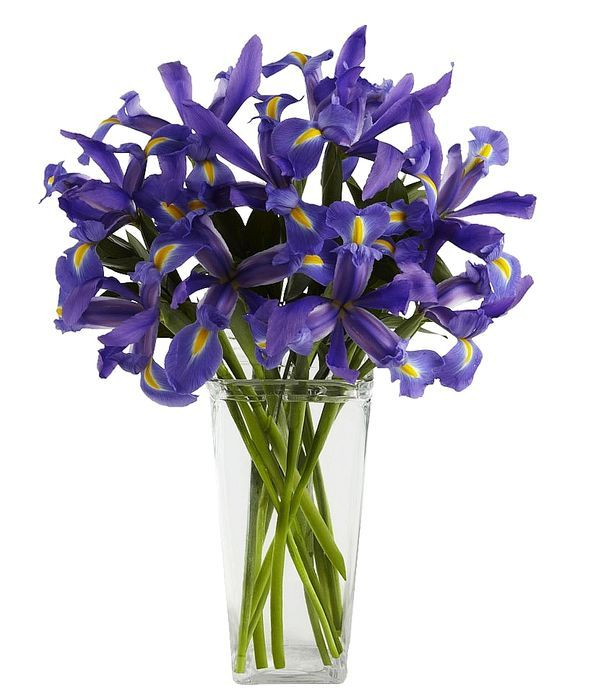 Blue irises in a bouquet