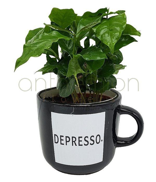 Εντυπωσιακό Καφεόδεντρο