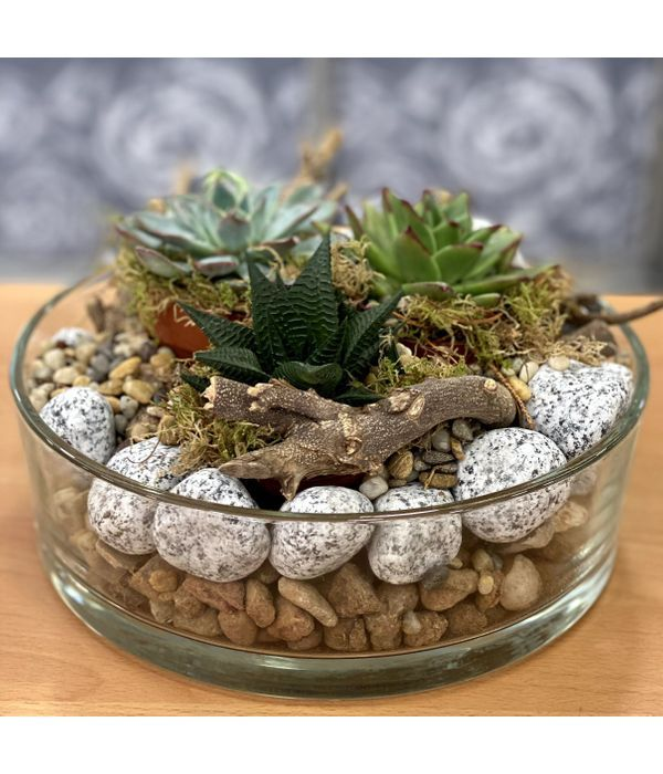 Succulents in a glass bowl with pebbles