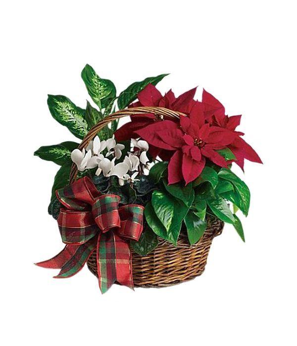Χριστουγεννιάτικη Σύνθεση με Φυτά