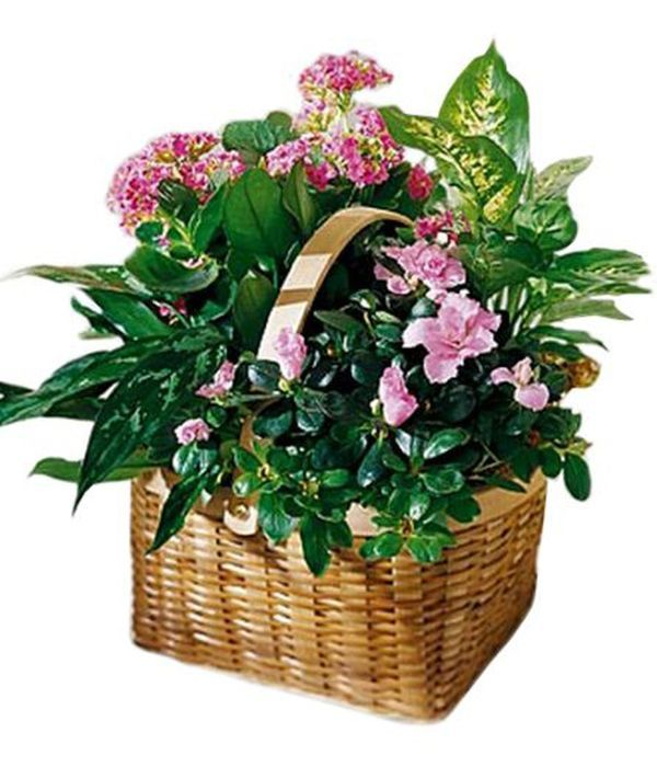 Basket garden arrangement