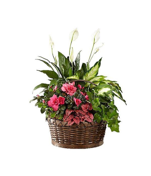 Καλάθι με ποικιλία φυτών