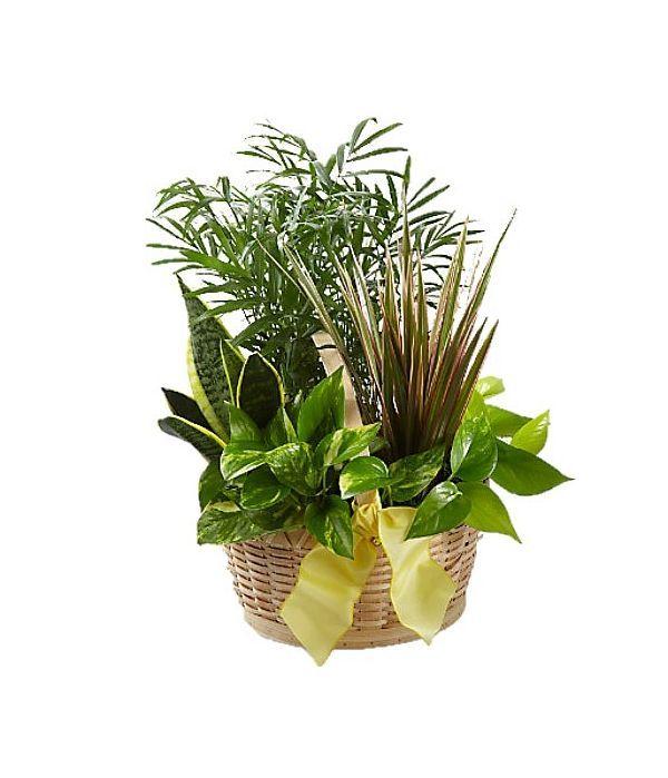 Υπέροχος συνδυασμός φυτών σε καλάθι