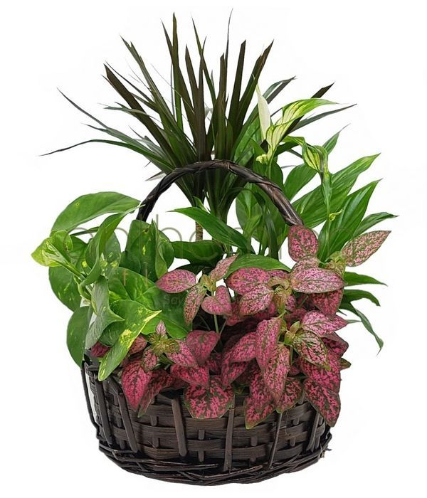 Basket filled with green plants