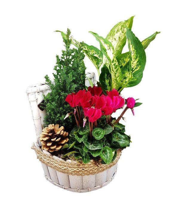 Christmas Arrangement of Plants