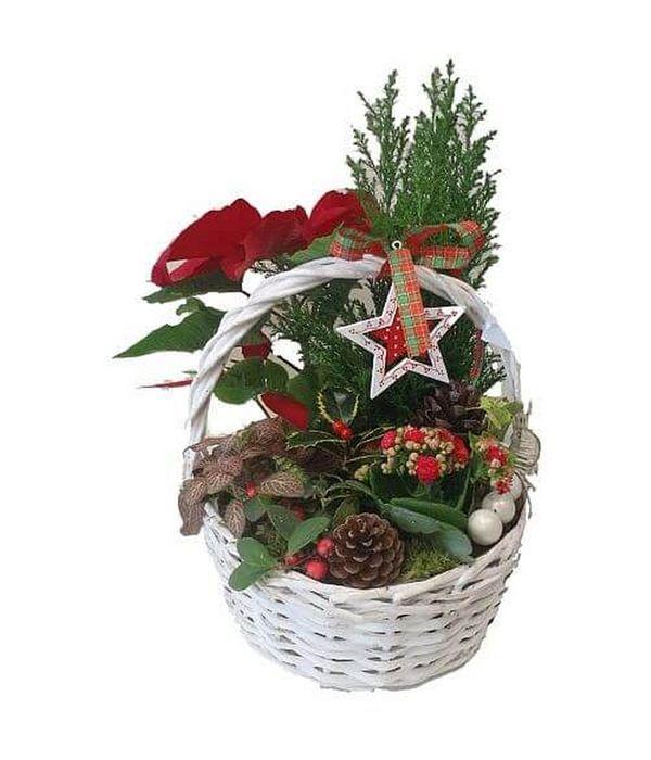 Χριστουγεννιάτικη Φρεσκάδα
