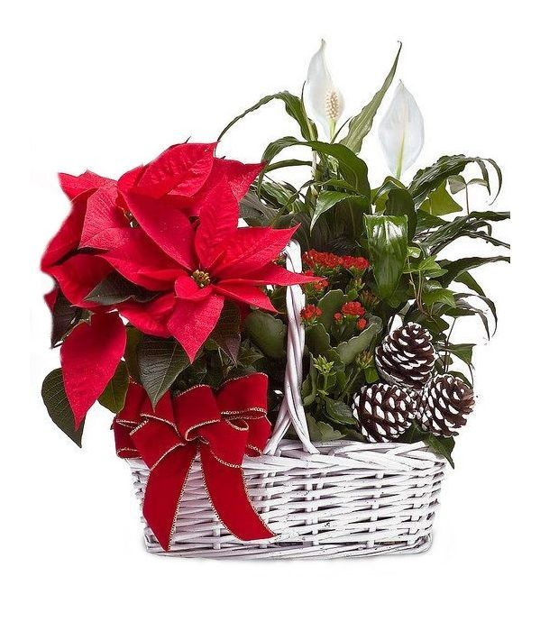 Basket Christmas Arrangement