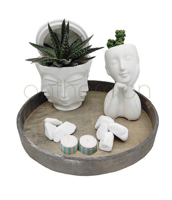 Succulents in decorative ceramic heads