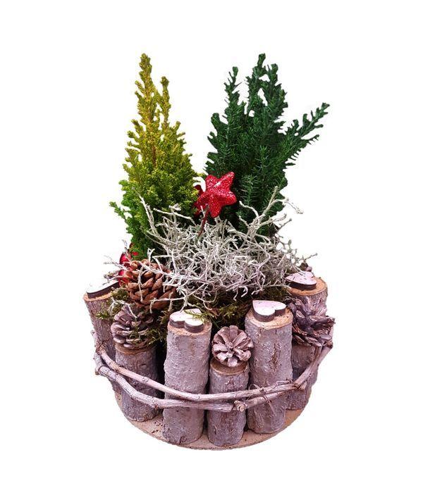 Φυτά Χριστουγέννων σε Ξύλινη Βάση με Κουκουνάρια
