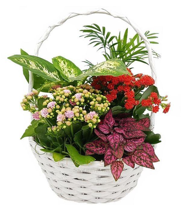Σύνθεση φυτών σε στρογγυλό καλάθι