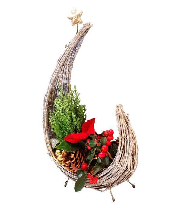 Χριστουγεννιάτικα Φυτά σε Μισοφέγγαρη Βάση