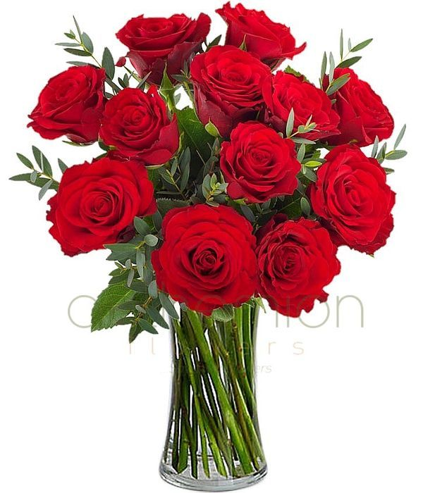 Μοναδική Προσφορά | 12 πολυτελή κόκκινα τριαντάφυλλα