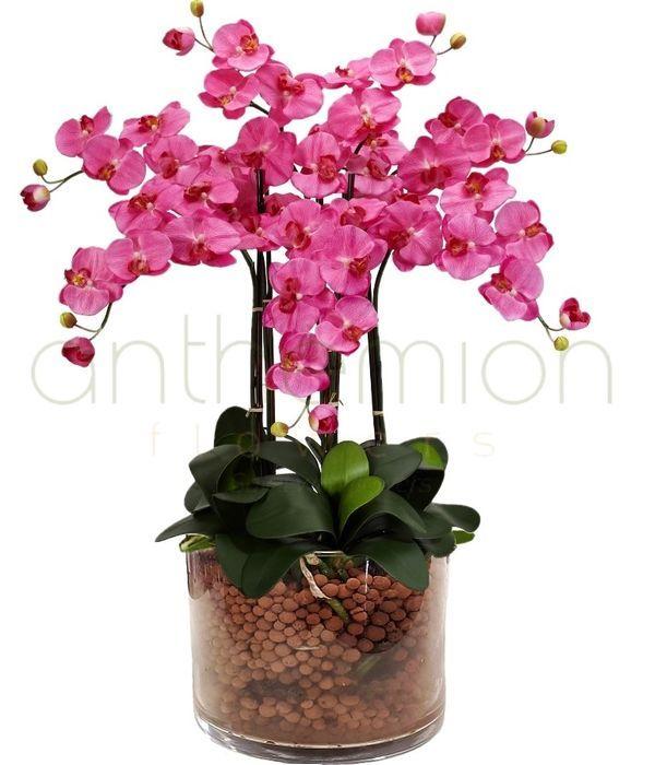 Ορχιδέα ροζ Φαλαίνοψις (4 κλαδιά σε γυαλί)