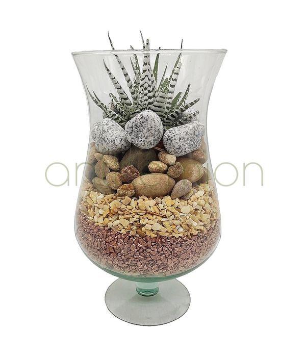 Elegant Succulent plant in  glass vase