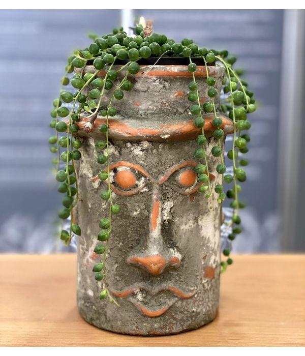 Succulent in a ceramic face pot