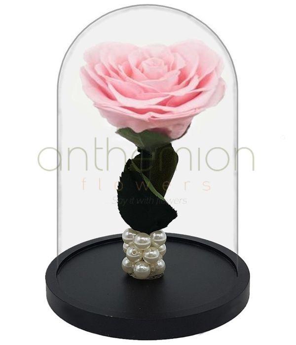 Ροζ Forever Rose (Μεγάλο μέγεθος)