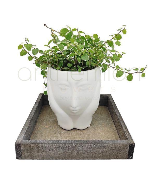 Κεραμικό κεφάλι με φυτό σε τετράγωνο δίσκο