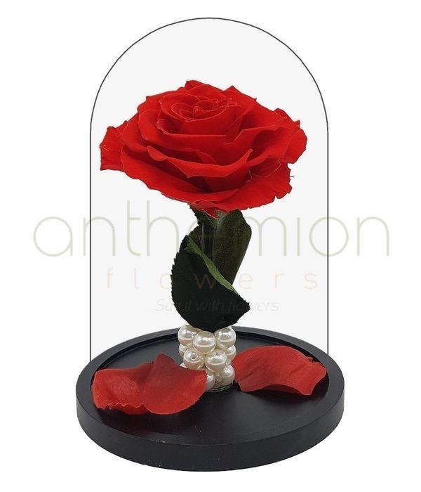 Κόκκινο Forever Rose  (Μεσαίο μέγεθος)