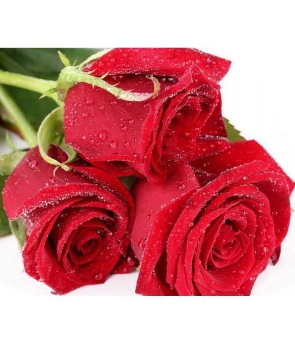 Roses per stem to Rhodos islands