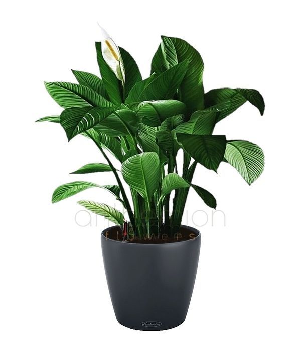 Gorgeous plant for office or home