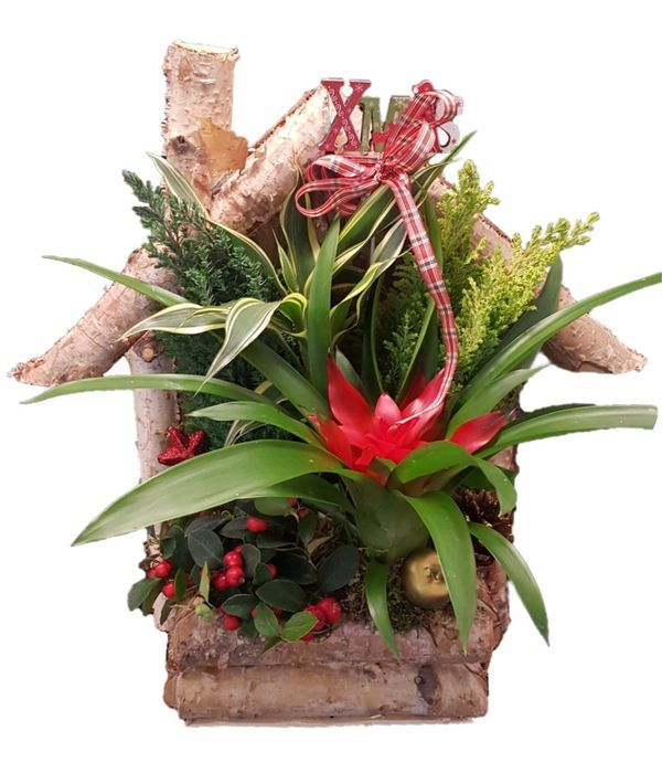 Rustic bird house plant arrangement