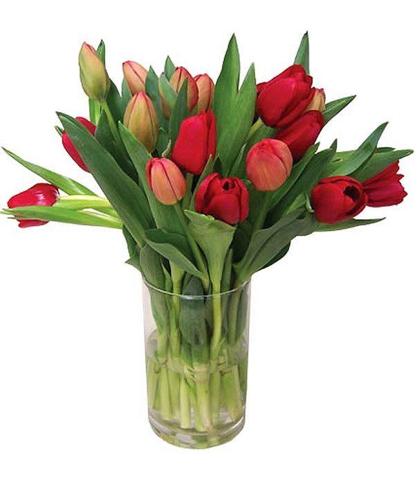 15 Fresh tulips