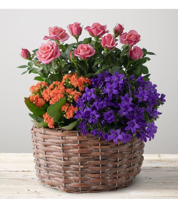 Vibrant Summer Planted Basket with flowering plants