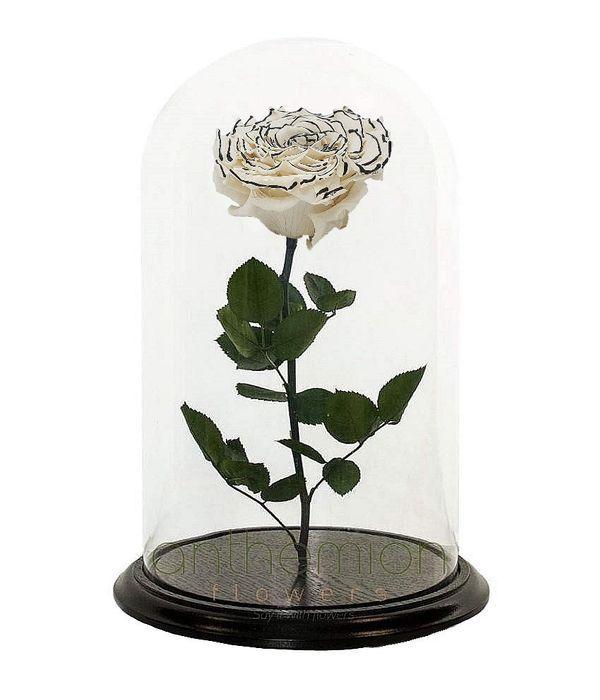 Λευκό-μαύρο forever rose (Μεσαίο μέγεθος)