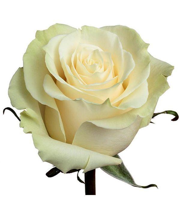 Λευκά Τριαντάφυλλα Εισαγωγής ανά τεμάχιο