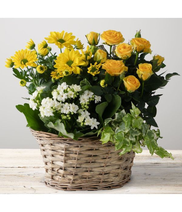 Radiant Yellow Planter with mix flowering plants